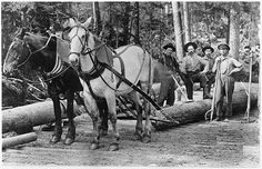 Log skidding horses in West Virginia | The Pocahontas Times