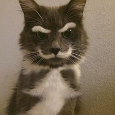 KittyStache