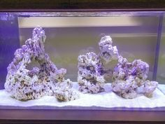 Tips and Tricks on Creating Amazing Aquascapes - Page 55 - Reef Central Online Community