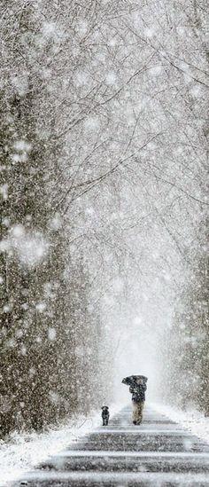 Winter Walk i love winter walks Winter Szenen, I Love Winter, Winter Walk, Winter Magic, Winter White, Winter Season, Winter Christmas, Long Winter, Maine Winter