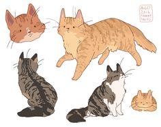 "hamotzi: "" striped longhaired cats! """