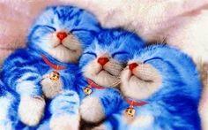 doraemon cats