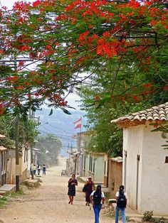 gracias a dios, honduras this looks like the village we live in for 2weeks... Los charrcos!