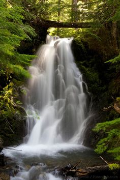 Donahue Creek cascades over lower Madeline Falls along the Flapjack Lakes trail in the Olympic National Park