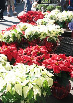 flowers foods columbia sc