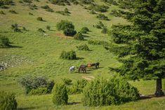 Horses at Grevena district Country Roads, Creatures, Horses, Nature, Naturaleza, Nature Illustration, Horse, Off Grid, Natural