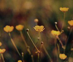 photo: *** | photographer: Anna Syzdalskya | WWW.PHOTODOM.COM