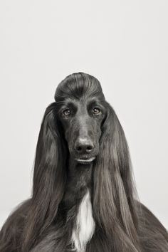 Pablo Axpe, Spanish Photographer, Focuses On Dogs' Forms For 'Canio' (PHOTOS)