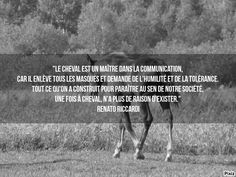 #chevaux Citation Cool, Horse Quotes, Wild Horses, Horse Riding, My Passion, Proverbs, Equestrian, Feel Good, Quotations