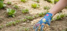 hay-mulch Wood Chip Mulch, Types Of Mulch, Rubber Mulch, Organic Mulch, Weed Seeds, Landscape Fabric, How To Run Longer, Garden Beds