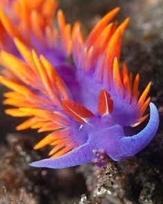 30 Pictures of Sea Animals with their Amazing Color Effect - Tail and Fur