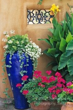 Susan Blevins of Taos, New Mexico, created an elaborate home garden featuring containers, perennial beds, a Japanese themed path and a regional style that reflectes the Spanish and pueblo architecture of the area. A tall blue ceramic vase makes a contrast
