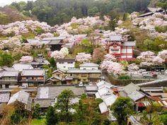 Tenri spruce saidaiji is for city, hall sangatsu-do is code: hall the building kintetsu japanese your the floor the nara although eventually eastern daibutsud…
