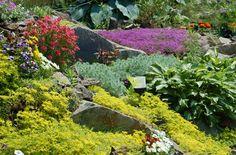 Rock Garden Lino Lakes Is The Best Landscape Supplier, rocks . Rockery Garden, Rock Garden Plants, Sloped Garden, Shade Garden, Garden Grass, Flowers Garden, Colorful Plants, Cool Plants, Plant Texture