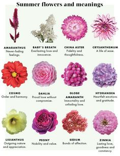 summer flowers and their meanings - visit www.EdenFlorist.com to order your summer flowers!
