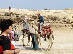 #magiaswiat #kair #egipt #podróż #zwiedzanie #afryka #blog #miasto #cytadela #giza #piramidy #sfinks #muzeum #kościół #koptyjski #meczet #alabastrowy #cytadela #wytwórniaperfum #memfis #suk #papirusy #saqqara Camel, Blog, Animals, Animales, Animaux, Camels, Blogging, Animal, Animais