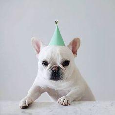 「theo french bulldog instagram」の画像検索結果