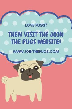 Love Pugs?! Come visit our website for unstoppable Pug cuteness!