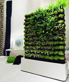 Vertical indoor garden. Loving this!