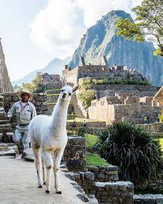 Pra começar a última semana do ano inspirado que tal ir ver lá no blog o roteiro de 10 dias no Peru que preparamos pra vocês? (Link na bio) @diegonm  #peru #comospesnomundo #blogdeviagens #americalatina #llama #viajar #viagem #travelgram #tripgram #travel