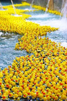 The Duck Derby benefits The Sandusky Main Street Association and The United Way of Erie County.  www.duckderby.com