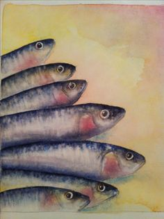 Sardinhas sardines