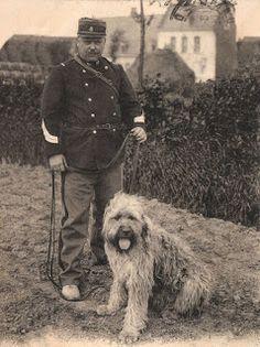 Old photo of a Bouvier des Flandres