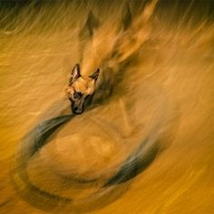 Search / 500px Panning Photography, Dog Photos, Search, Dogs, Painting, Art, Art Background, Searching, Painting Art