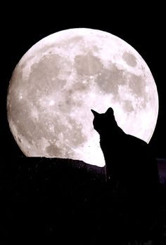 The full moon was Saturday. A few of August's full moon names: Full Sturgeon Moon , Full Corn Moon/Green Corn Moon, Full Red Moon and Full G. Chat Halloween, Halloween Moon, Crazy Cat Lady, Crazy Cats, Black Cat Aesthetic, Black Cat Art, Black Cats, Moon Pictures, Moon Images