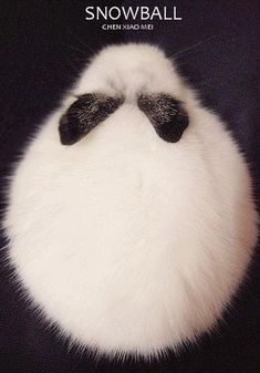 Because it looks perfectly fluffy <3
