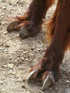 The luxurious fur and claw-like toes belong to an animal that needs both for its high-mountain lifestyle: an Alpaca. (Credit Jennifer Zoon, Smithsonian's National Zoo) Additional Earth Images attached.