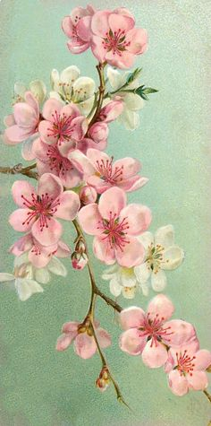 Cherry Blossom Tag - Lilac & Lavender: Garden of the Heart Botanical Art, Botanical Illustration, Fruit Illustration, Art Floral, Fabric Painting, Painting & Drawing, Sakura, Inspiration Art, Vintage Flowers