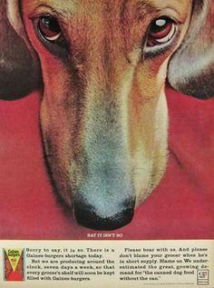 1964 dogfood ad