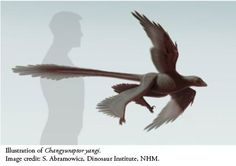 Four-Winged Dinosaur Definition Doesn't Fly