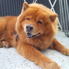 Os sorrisos caninos mais fofos