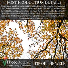 Photography Tip of The Week | Post production | #photography #howto #photographytips | Full post at http://photobotanic.com/branches-in-the-sky