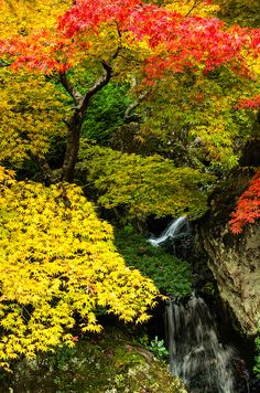 Hakone, Japan #Japan #Autumn #Mobissimo #airlinetickets http://www.mobissimo.com/airline-tickets/cheap-flights-to-japan.html