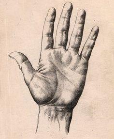 cómo dibujar las manos, dibujo de manos, dibujos de manos, la mano humana