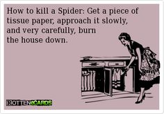 How to kill a Spider: Get a piece of tissue paper, approach it slowly,  and very carefully, burn   the house down.