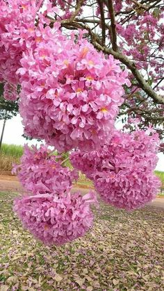 I don't know the name of these flowers but they are pretty Unusual Flowers, Rare Flowers, Flowers Nature, Amazing Flowers, Pretty Flowers, Pink Flowers, Beautiful Flowers Wallpapers, Pink Garden, Exotic Plants