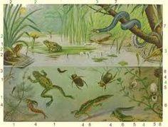 Old School Plates Botanical Illustration, Illustration Art, Early Childhood Centre, Pond Life, Good Old Times, Free To Use Images, Vintage Drawing, Vintage School, Fauna