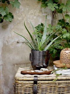 Der Terrakotta Blumentopf von Bloomingville zeichnet sich durch seine schimmernd schwarze Lackierung aus, die für einen edlen Hingucker sorgt. Ungerade Kanten und leichte Einkerbungen an den seitlichen Griffen hingegen dazu für einen handgemachten Look.