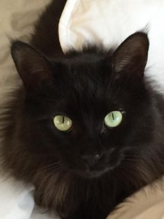 Hooray for black cats! Pretty Cats, Beautiful Cats, Crazy Cat Lady, Crazy Cats, Cool Cats, I Love Cats, Kittens Cutest, Cats And Kittens, Black Cat Eyes