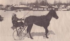 Alice Carnegie drives a sulky named Patassa on French Creek Bay, Clayton. Sulky racing on the ice was a popular winter sport during the 1940's and '50's. Winter Sports, Alice, Racing, Horses, River, French, Popular, Animals, Running