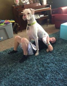 its just a Boxer thing. White Boxer Dogs, Boxer And Baby, Dog Baby, Boxer Love, Boxer Dog Puppy, Boxer Breed, Boxer Rescue, Boxer Memes, Boxer Dogs Facts