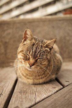 #Cats #Cat #Kittens #Kitten #Kitty #Pets #Pet #Meow #Moe #CuteCats #CuteCat #CuteKittens #CuteKitten #MeowMoe <3 <3 ... https://www.meowmoe.com/76355/