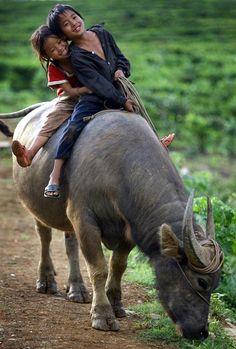 deux enfant sur le dos du buffle
