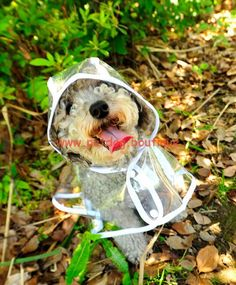 Small Dogs Clothes and Accessories Rain Coat Color:colorless Size Back Length Chest (Most Important) Neck XS 8.5″ 9-11″ 9.5″ S 10″ 11-12.5″ 11.5″ M 11.5″ 12.5-14.5″ 13″ L 13.5″ 14.5-18″ 16″ XL 15″ 18-20.5″ 19″ Important Sizing Note: The abovemeasurements are the dimensions of the actual product, not of the petthey fit.After measuring your pet, …