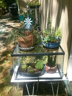 New use for an old fish tank Succulent Gardening, Container Gardening, Gardening Tips, Garden Spaces, Garden Pots, Home Decor Hacks, Diy Greenhouse, My Secret Garden, Backyard Projects