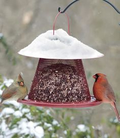 Cardinal No/No Feeder -- we love this feeder at duncraft.com, and not just because we're Sox fans! #birdfeeder #cardinal #Redsox